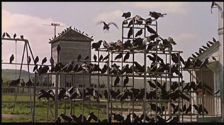 Os pássaros começam a atacar inexplicavelmente