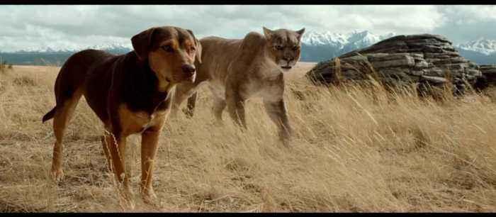 Durante sua jornada, Bella encontra diversos personagens a caminho de casa
