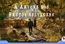 Photo of A Árvore dos Frutos Selvagens, um drama intimista
