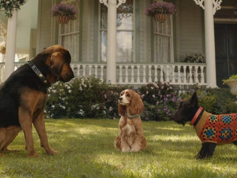 Lady e os cachorros da vizinhança